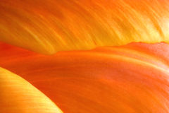 Tulip Petals (macro). Orange and yellow tulip petals (macro). Natural light Royalty Free Stock Photography
