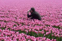 Tulip photographing Stock Photo