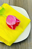 Tulip pink on the plate Royalty Free Stock Image