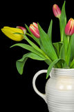 Tulip Pitcher Royalty Free Stock Photo