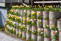 Tulip retaining wall. Retaining wall made of precast concrete elements with many tulips in different bright colours stock photography