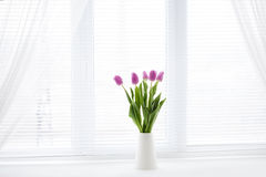 Tulip in room Royalty Free Stock Photo