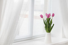 Tulip in room Royalty Free Stock Photography