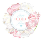Tulip round banner. Vector round banner with white and pink tulip flowers. Spring tender design for natural cosmetics, perfume, florist shop. Can be used as Stock Photography