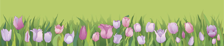 Tulip in row banner  Royalty Free Stock Images
