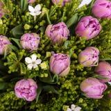 Tulip roxo Fotos de Stock