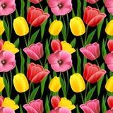 Tulip seamless background Stock Image