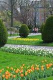 Tulip Season Arkivfoton