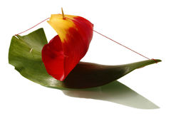 Tulip ship. The ship is made of a green leaf of a tulip, a red petal of a flower and a toothpick on a white background Royalty Free Stock Image