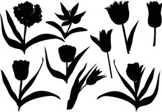Tulip silhouettes on white Royalty Free Stock Image