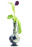 Tulip. Single tulip in delftware vase isolated on white background Royalty Free Stock Photo