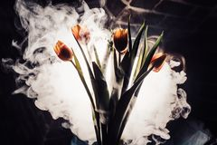 A tulip in smoke. Tulips in smoke and light Royalty Free Stock Photos
