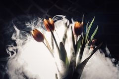 A tulip in smoke. Tulips in smoke and light. another view Stock Photography