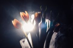 A tulip in smoke. Tulips in smoke and light. another view with light Stock Photography