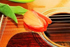 Tulip and sound. Tulip flower on the strings of a guitar, showing off love message Royalty Free Stock Images