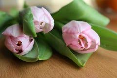 Tulip. Pink spring Royalty Free Stock Photos