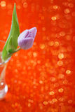 Tulip  Spring flower on red and glitter Royalty Free Stock Images