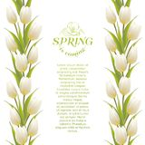 Tulip spring flowers bouquet for your card design. Vector illustration Stock Photos