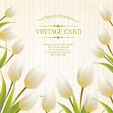Tulip spring flowers bouquet for your card design. Stock Images