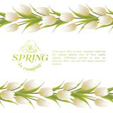 Tulip spring flowers bouquet for your card design. Stock Photo