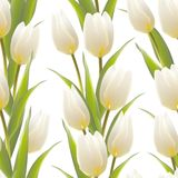 Tulip spring flowers seamless pattern. Stock Photography