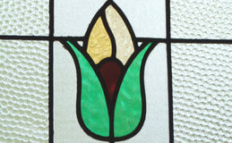 Tulip stained glass. A stained glass window with a tulip flower Stock Image