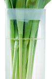 Tulip stems in vase. With water Stock Photo