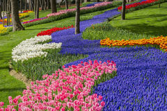 Tulip time. View from istanbul tulip festival in Emirgan Park / istanbul Stock Photography