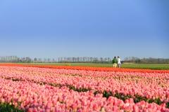 Tulip tourism Stock Photo