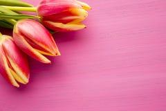 Tulip. Stock Photography
