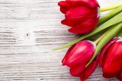 Tulip. Stock Image