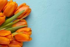 Tulip. Stock Images