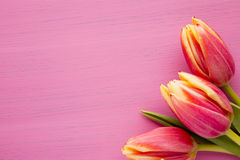 Tulip. Royalty Free Stock Photography