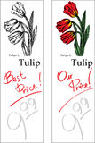 Tulip - Two Price Tags. For florist shop Royalty Free Stock Photos