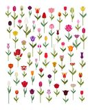 Tulip varieties flat icon set. Garden flower and house plants in. Fographic. Vector illustration Royalty Free Stock Photography