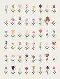 Tulip varieties flat icon set. Garden flower and house plants in. Fographic. Vector illustration Royalty Free Stock Image