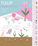 Tulip varieties flat icon set. Garden flower and house plants in. Fographic. Vector illustration Stock Photo