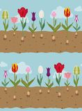 Tulip varieties flat seamless pattern. Garden flower and house p. Lants. Vector illustration Stock Images