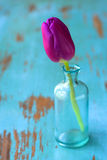 Tulip in vase Royalty Free Stock Image