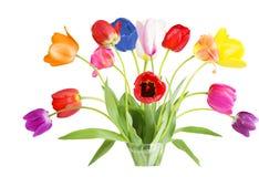 Tulip in Vase Royalty Free Stock Photo