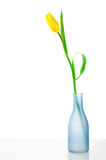 Tulip in vase Royalty Free Stock Photo