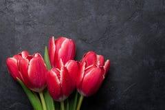 Tulip vermelho #01 Foto de Stock