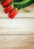 Tulip vermelho #01 Fotografia de Stock Royalty Free