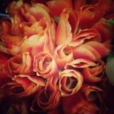 Tulip vintage stlye Royalty Free Stock Image