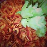 Tulip vintage stlye Royalty Free Stock Photo