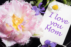 Tulip, violet and daisy with card i love you mom Royalty Free Stock Photography
