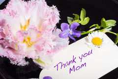 Tulip, violet and daisy with card Thank  you mom Stock Image