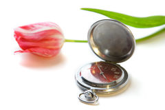 Tulip and watch. A photo of a watch and a red tulip Royalty Free Stock Photo