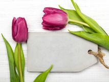 Tulip on white wooden background Royalty Free Stock Photos