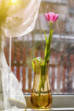 Tulip on a window sill Royalty Free Stock Images